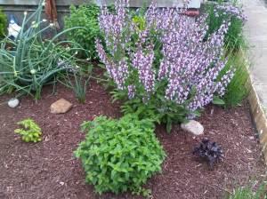 Flower Sage