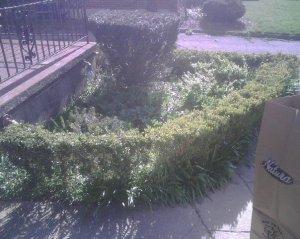 Pre-Herb Garden